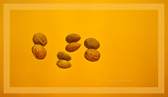 Die letzten Nüsse...