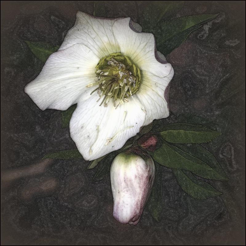 Portrait de fleurs (visions graphiques) 41218476.ded2bf76.800
