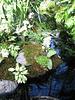 Floral Tableaux (Explored)