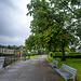 Red Horse Chestnut Tree, Dumbarton Quay