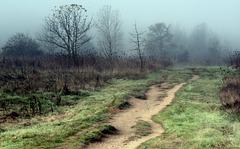 Dirt path and fog