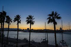 abends am Paseo del Muelle Uno Malaga (© Buelipix)