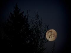 1 (59)...austria moon ..trees...werewolf time