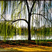 Un sipario sul lago - (632)