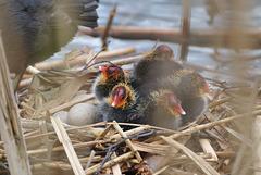 ich hab doch noch ein paar Eier gefunden ;-) (PiP)