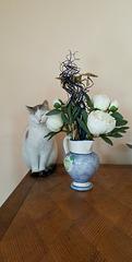 Flower's Cat