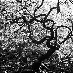"""""""Moi, l'automne me fait danser"""" parole d'arbuste"""