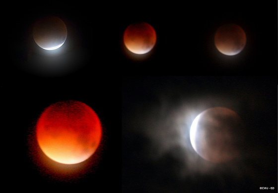This morning's Total Lunar Eclipse - a Super Moon combined with a total eclipse gives us the Blood Moon