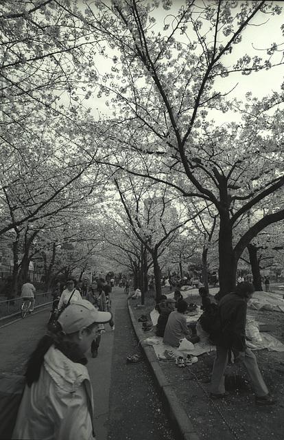 sakuranomiya-09