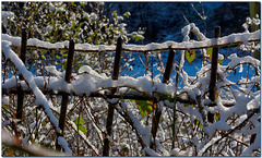 HFF -   A touch of snow fence