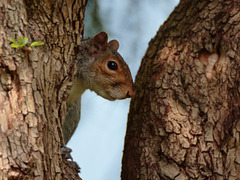 Squirrel with Cheeky Smile
