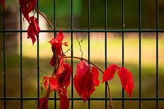 Ganz nah dran am Herbst