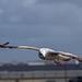 Flight (11)