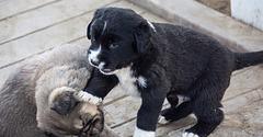 20151207 9771VRAw [R~TR] Hunde, Ephesos, Selcuk
