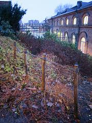 Even plants need fences ...