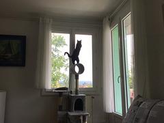 Elle est sur la vitre ...Mais dehors , la bébête , Poppy