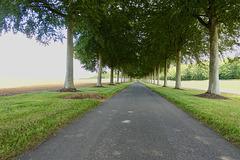 Moor Chrichel Avenue