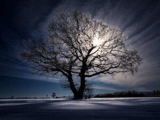 Der Baum - Dark Light