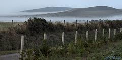 HFF  - Misty fence