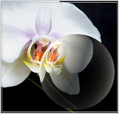 Orchid and Crystal ball. ©UdoSm