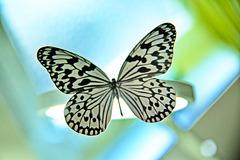 бабочка  -  babochka