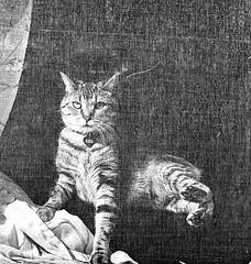 Screen cat 2