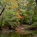 Big Wills Creek - Early Fall