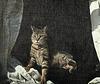 Screen cat 3