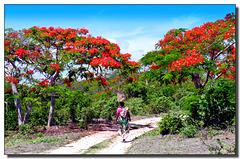 Natale in Madagascar - (745)