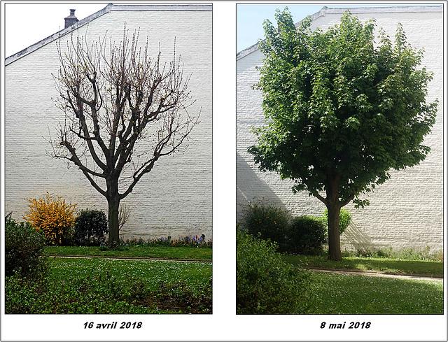 Métamorphose d'un arbre urbain