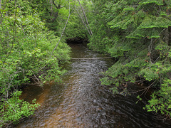 CARRIES ITS WATERS IN A TIMELESS MANNER: the small river the Trout River on the northeastern Lower Peninsula.