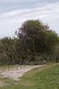 Nordholländisches Dünenreservat DSC09315