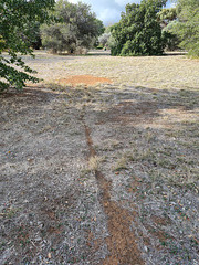 The ant nest and trail