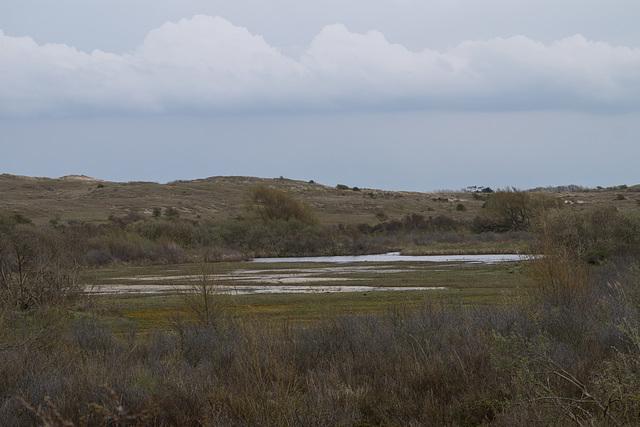 Nordholländisches Dünenreservat DSC09308