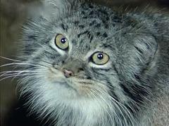 """""""Les Chinois voient l'heure dans l'œil des chats"""", selon Charles Baudelaire_________EXPLORER"""