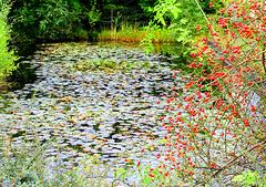 Forgotten  pond