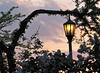 Lilacia Park at Dusk