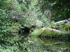 Münchner Dschungel