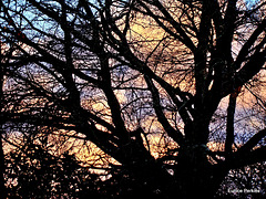 Evening Through Barren Branches .
