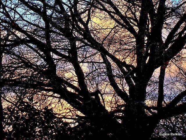 Evening Through Barren Branches .