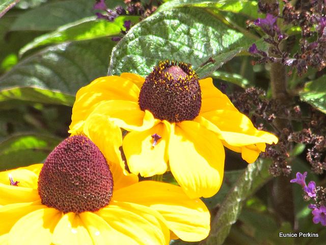 Yellow Petals.