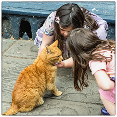Louis, the Wells Cathedral Cat (PiP)