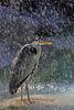 Explored - Reiher unter der Dusche (Wilhelma)