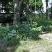 Jardin botanique de La Charme -63 (21)