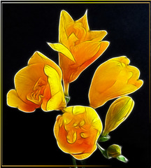 Painted Freesia.  ©UdoSm