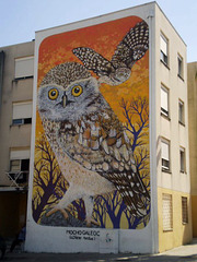 Galician owl, by Charquipunk, Chile.