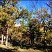El Escorial through the autumn leaves. H. A. N. W. E. everbody!
