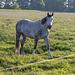 05-30 Bild mit Pferd