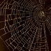 House of Spider