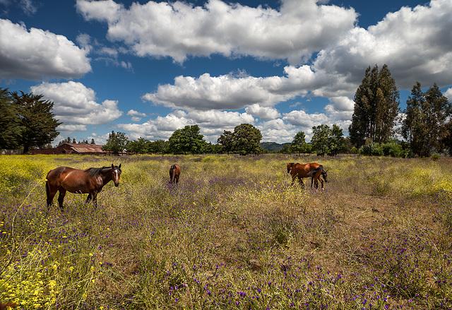 horses' paradise